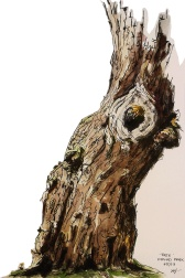 Tree, Oxford Park, 2013 Ink, watercolor 5x7