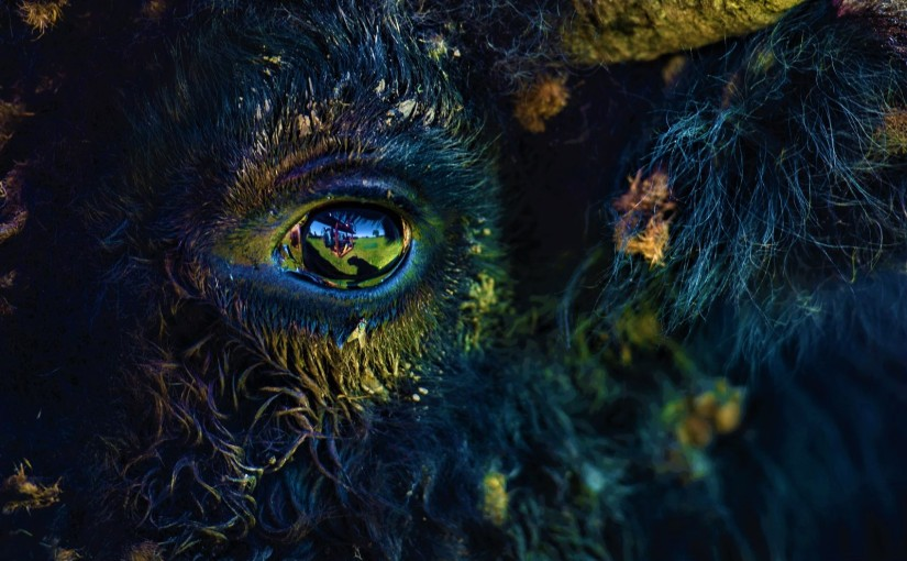kiyanâw maskihkîwakan – OURMEDICINES_INTRO